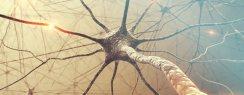 Chiropractors in Columbus Are Nervous System Doctors